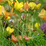Thumbnail: Urban garden flowers left uncut