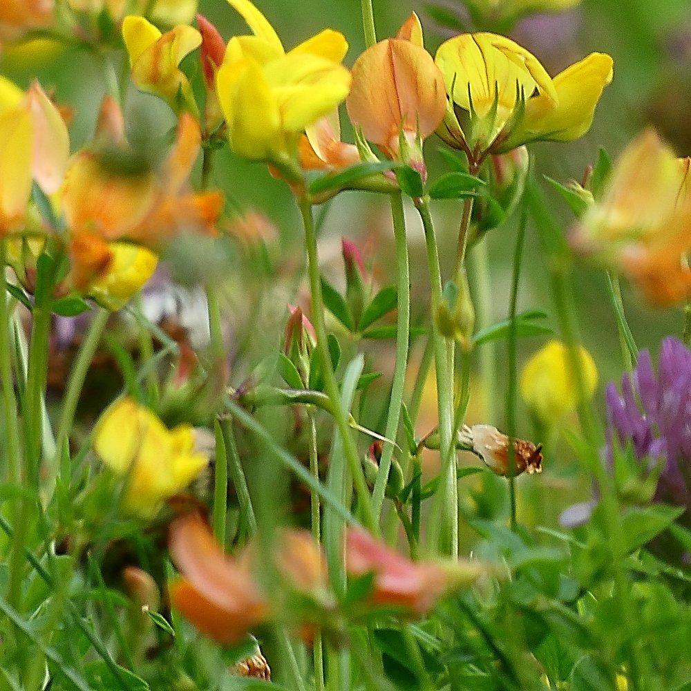 A snapshot of an average urban garden's flowers if left unmown